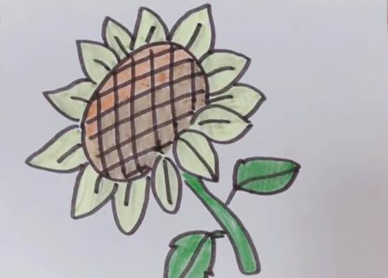 可爱向日葵简笔画彩色